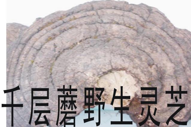 木灵芝_供应信息_中国食品科技网
