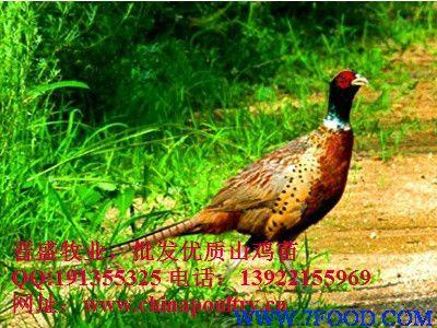 野鸡是不是保护动物