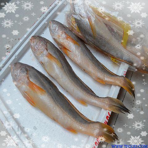 供应 缅甸黄鱼