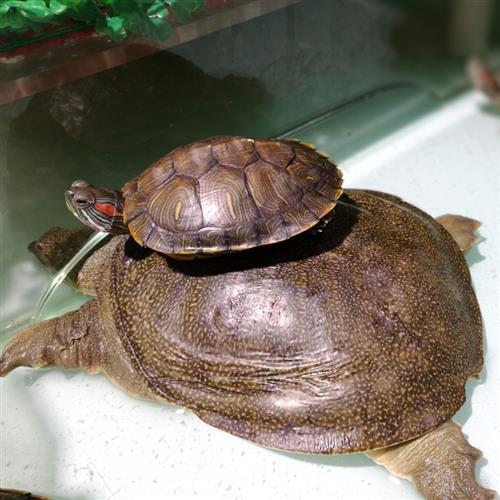 乌龟_水产品_食物图库图片