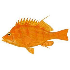 食品雕刻金鱼图片