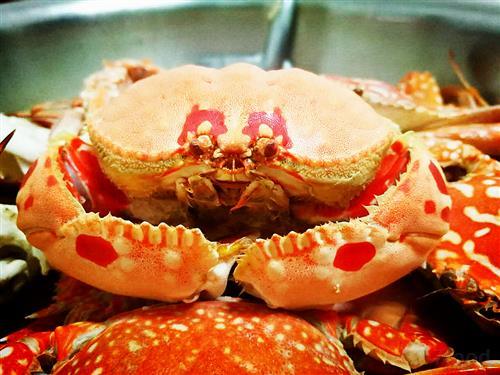 活螃蟹怎么去内脏图解
