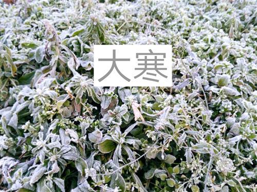 大寒花卉手绘黑白