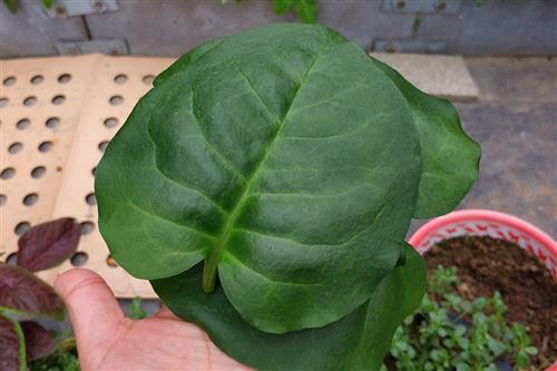背景 壁纸 昆虫 绿色 绿叶 树叶 植物 桌面 449_302
