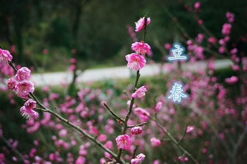 立春好冷的图片可爱