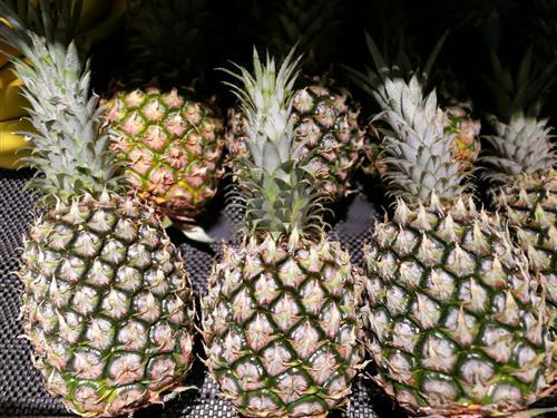 家里装修后同,很多人把菠萝放在室内吸附异味,所用的菠萝不能再供食用