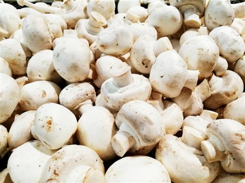 贴三伏贴不能吃蘑菇吗 2016三伏贴饮食禁忌指南