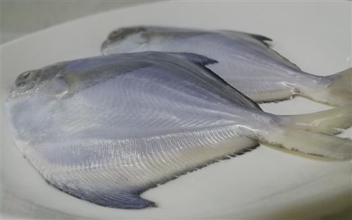 草鱼骨架结构图