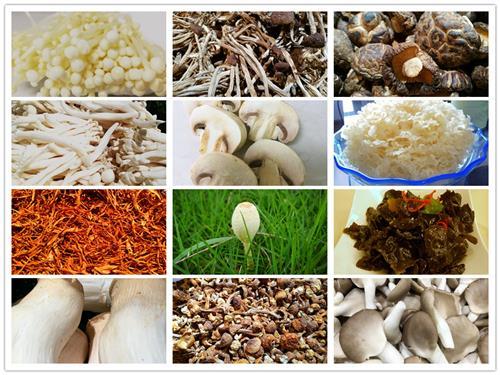 白色长长的蘑菇叫什么
