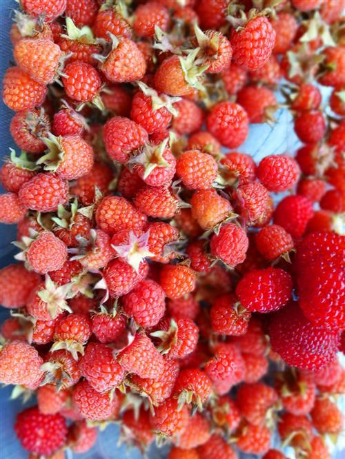 莓类水果减肥有奇效