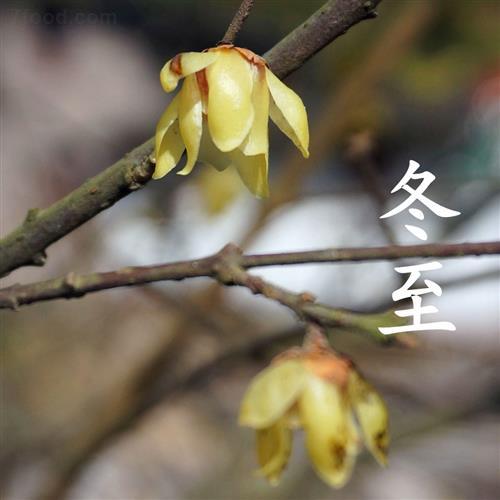 冬至为什么要吃饺子?冬至吃饺子的习俗大揭秘_中国习俗_习俗文化 - 芹菜叶子 - 芹菜叶子 的博客