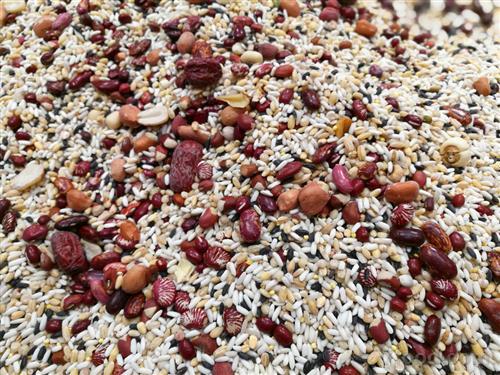 豆类作品矢量图