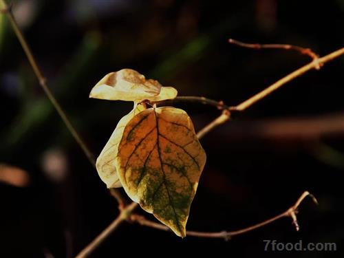 一场秋雨一场寒 秋季小心预防感冒