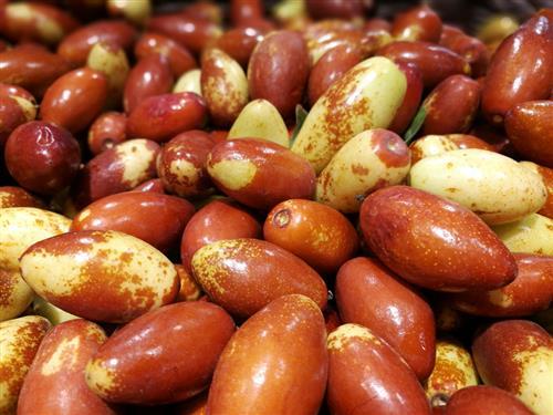 金丝枣与大枣有什么区别