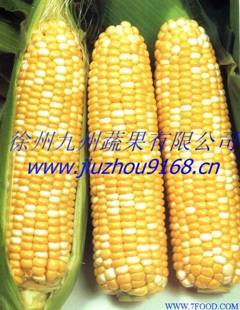 水果玉米_水果玉米