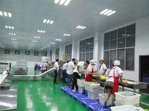 净菜加工生产线涡流式洗菜机流水线中央厨房生产线(其他)图片