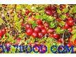 三门峡盈润食品有限公司:蔓越莓浓缩汁原浆原料