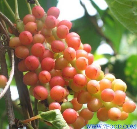 主要有效成分为木脂素类如五味子甲素