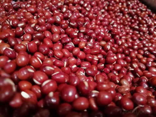 红小豆主产区遭遇连续降雨 单产受影响后期行情成谜