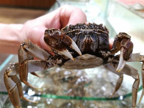 吃大闸蟹什么部位不能吃