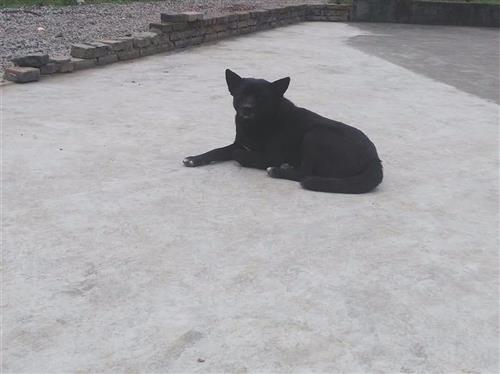 非法屠宰作坊竟然宰杀宠物狗 警方介入调查
