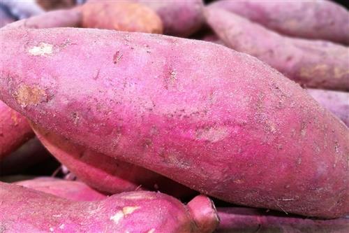 薯类广为人知的一大特点是含丰富的膳食纤维