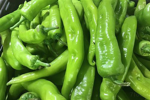 辣椒批发均价上涨近两倍 建议菜农顺势出货