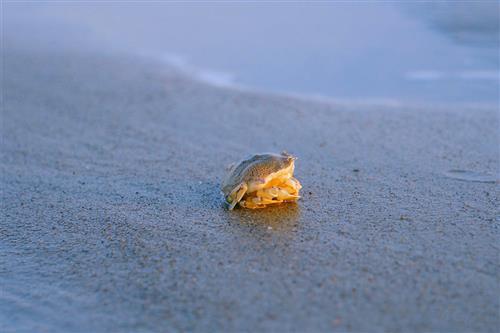 中国海洋药物研发现状堪忧 向海洋要药咋这么难?