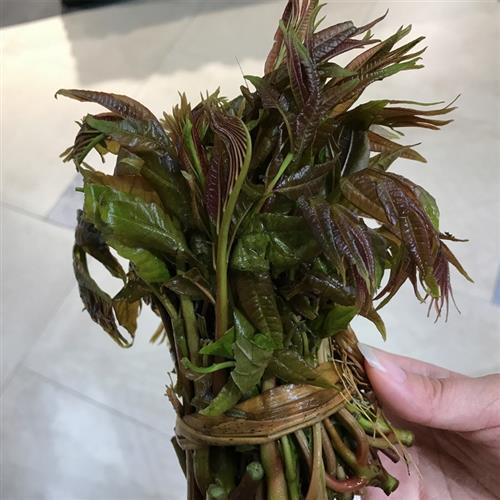 """时令野菜抢""""鲜""""上市 香椿最""""金贵"""""""