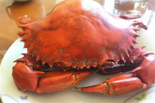大妈吃螃蟹后送急诊手术 这7类人吃螃蟹可能会出事