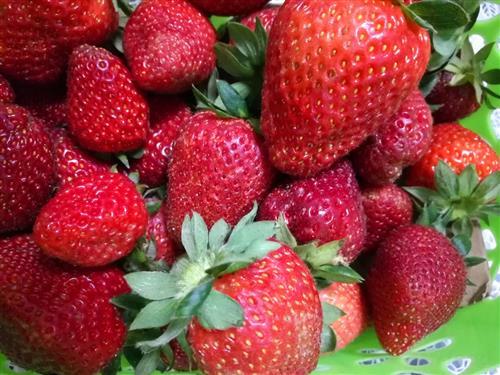 冬草莓价格飙升 一颗售价五六元 你吃着肉痛吗?