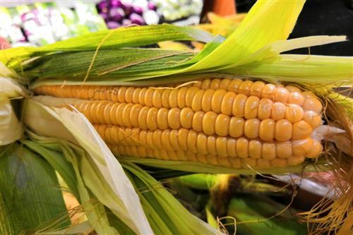 今年玉米价格将大幅上涨?农业农村部:稳中有升