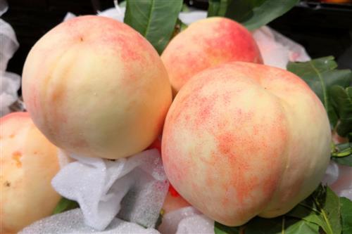 吃桃子农残超标住进ICU