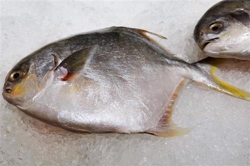 如何筛选到鲜活的鱼?厨房生手挑鱼要注意这几点