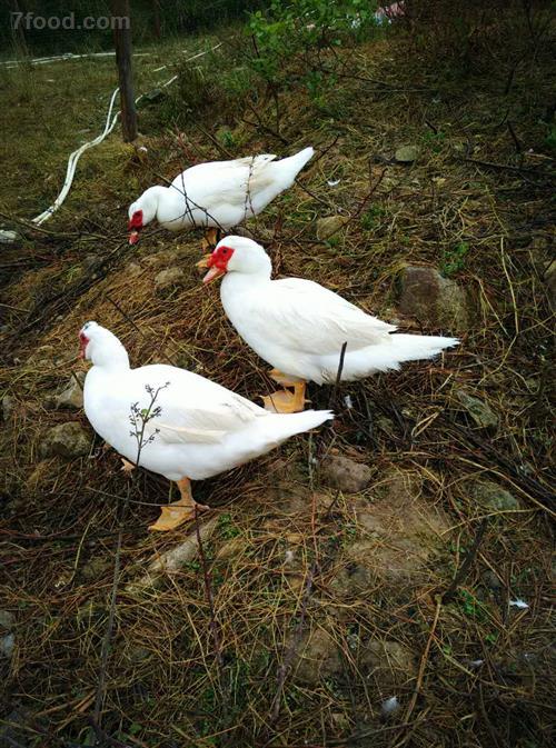 H7N9春季高发 如何预防禽流感