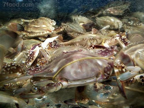 螃蟹怎么区分公母图片