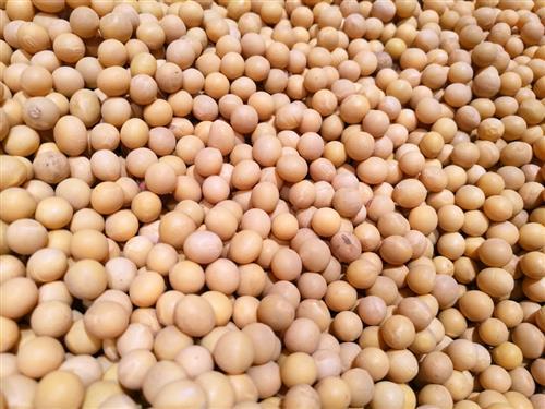 差异化生产者补贴政策引导自主改种大豆